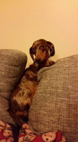 My dog Lulu that had behavioural problems