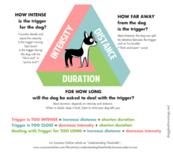 Managing Stimuli in puppies as part of New England Vet Services Puppy Preschool